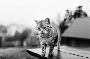 grzegorz_pastuszak_photography-9593