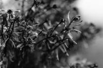 grzegorz_pastuszak_photography-9622